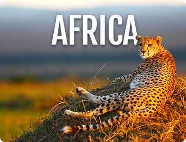 Escorted Africa Tours - Cosmos® Budget Vacations